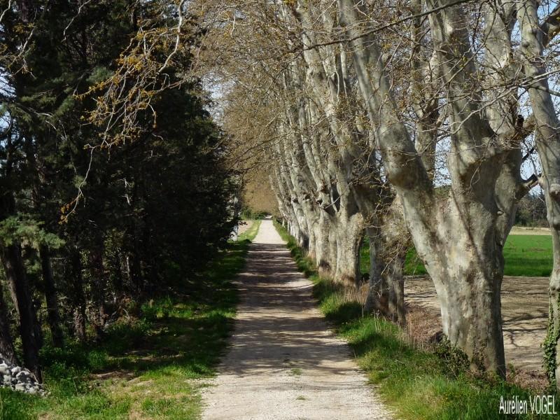 Le printemps, et ces arbres presque tous fleuris P1110335