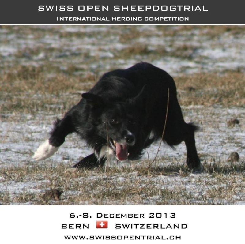 Swiss Open 2013 10017110