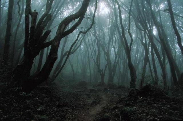 Floresta Obscura  Dark_f10