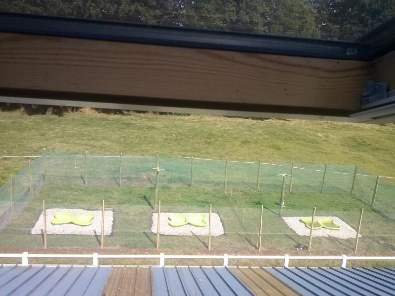 parc à canards Cam00112