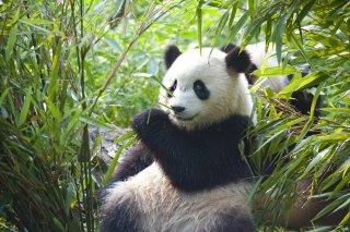 Comment aider les animaux en voie de disparition ? B46