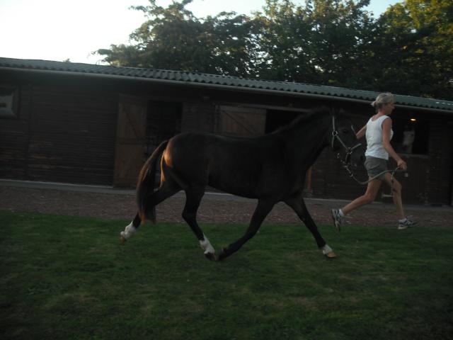 PEPITA - ONC poney née en 2003 - adoptée en février 2013 par zoune - Page 3 Dscf5313