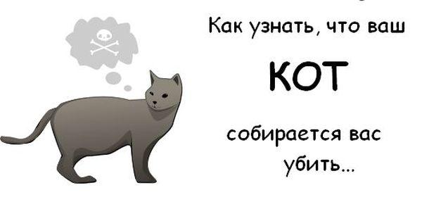 Как узнать, что ваш кот собирается вас убить☺ 111