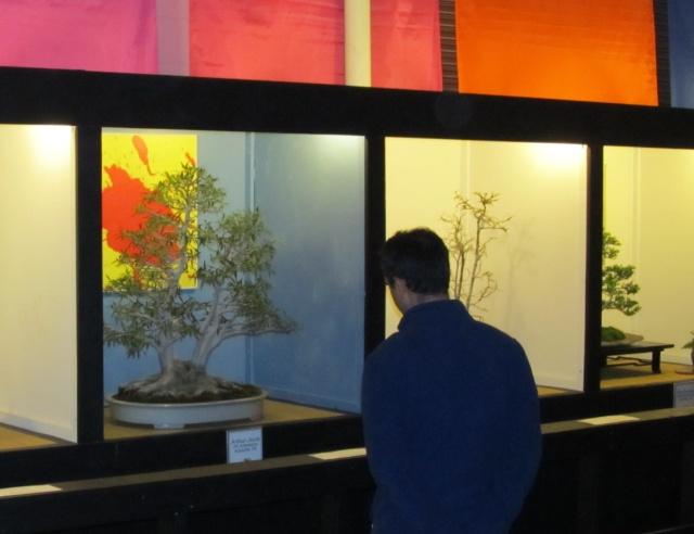 American Bonsai at the NC Arboretum Copy_o10