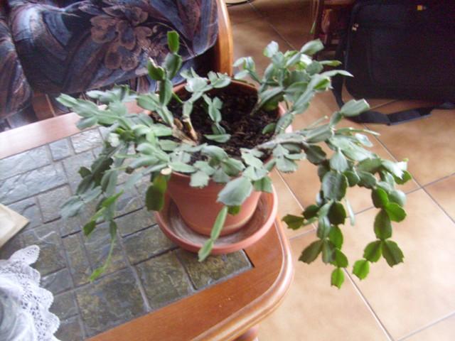 Quelques plantes d'intérieur... - Page 4 S7302722