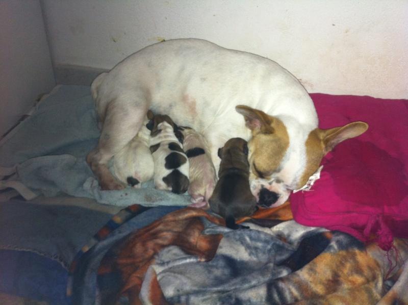Ma chienne en est à 61 jours de gestation, toujours rien! - Page 3 Img_0619