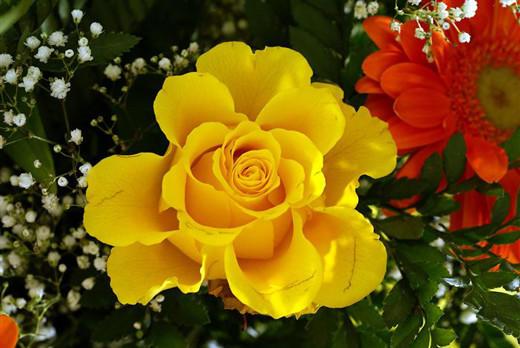 كهسوكاری كوژراوهكهی رزگاری داوای گولـلهبارانكردنی بكوژهكه دهكهن Flower10