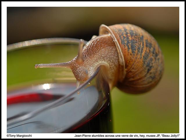 escargots pour de rire 47561310
