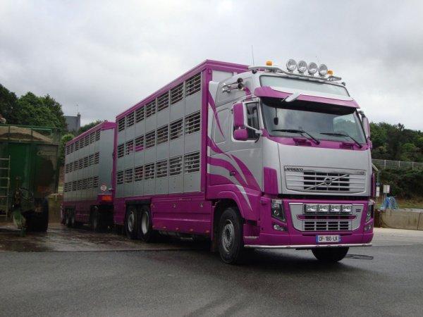 Scania R730 et le Volvo FH16 600 que je vois souvent vers chez moi 31054711