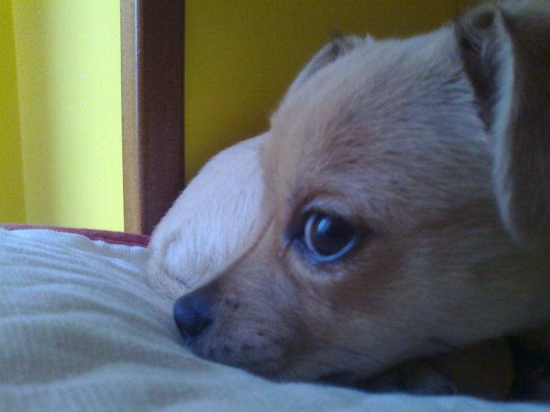 Mi pequeña Laika  910