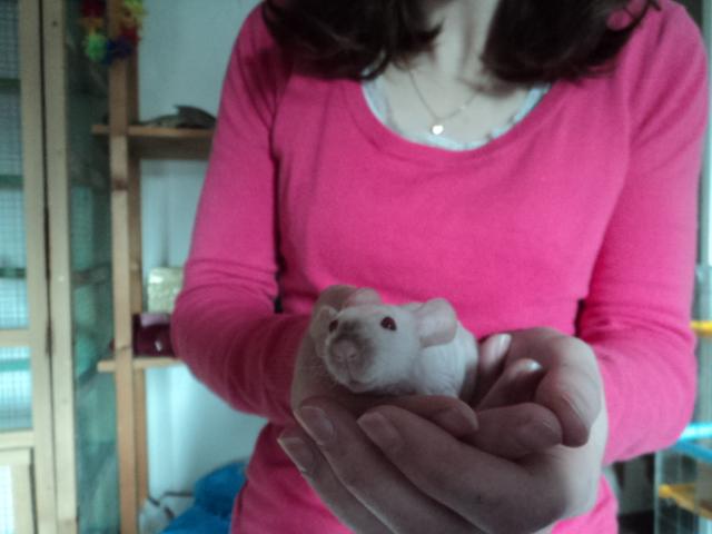 Et encore a nouveaux rat ^^ Dsc01945