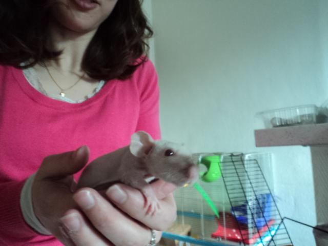 Et encore a nouveaux rat ^^ Dsc01946