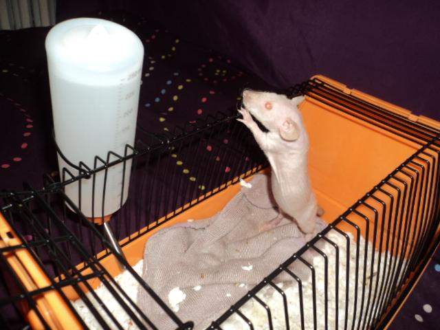 Et encore a nouveaux rat ^^ Dsc02010