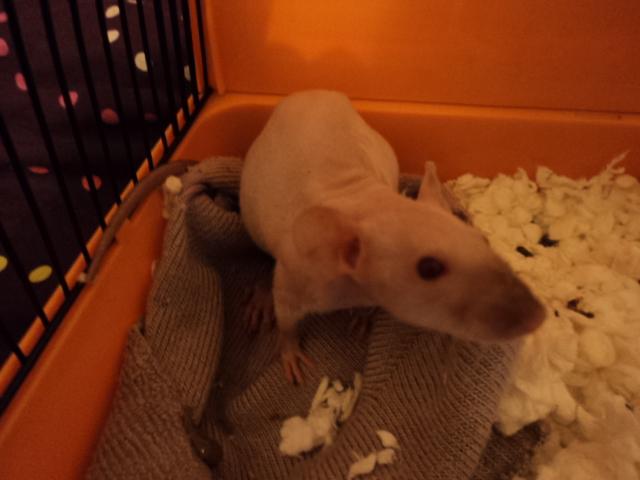 Et encore a nouveaux rat ^^ Dsc02012