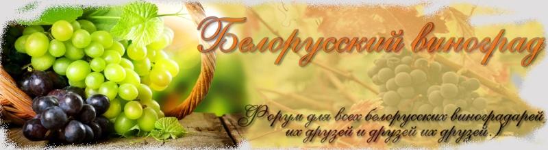 Виноградные дела - сезон 2013 - Страница 2 Dddd3-13