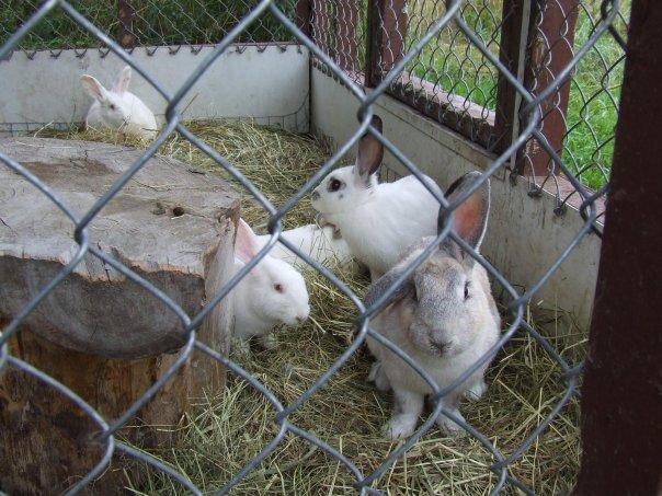 Création du clapier et espace lapins - votre avis? 16741_19