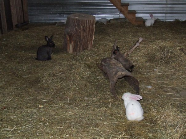 Création du clapier et espace lapins - votre avis? 16741_20