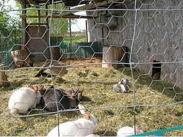 Création du clapier et espace lapins - votre avis? 21640112