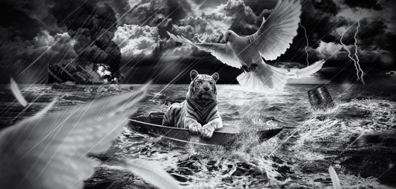 fond d'écran tigres Tigre_12