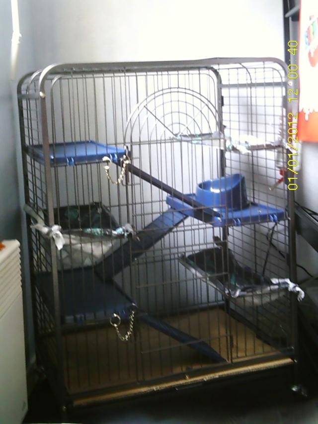 Photos de vos cages - Page 37 Sunp0046