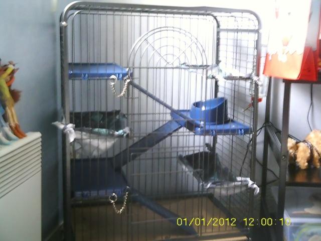 Photos de vos cages - Page 37 Sunp0047