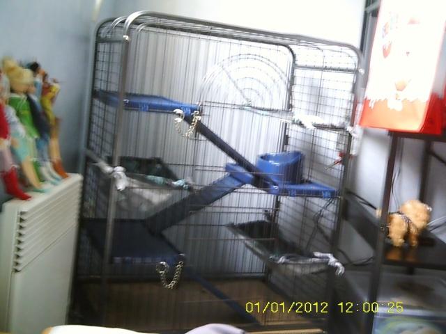 Photos de vos cages - Page 37 Sunp0048