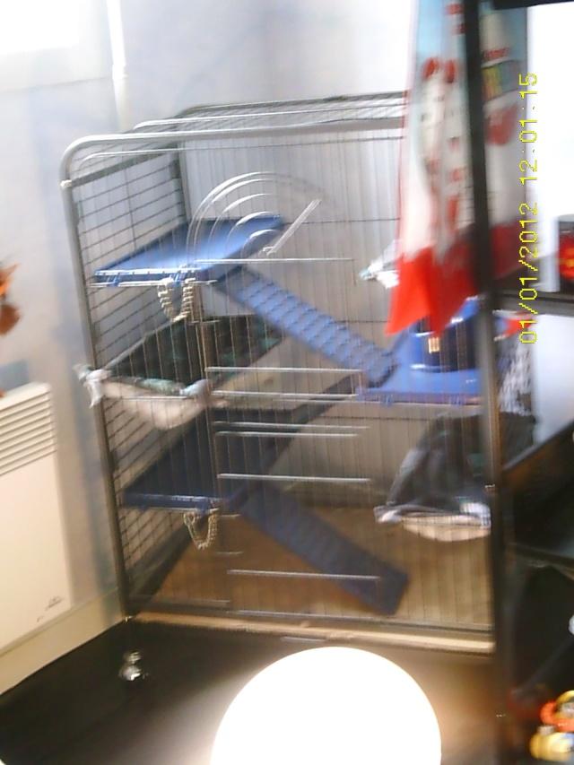 Photos de vos cages - Page 37 Sunp0049