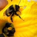 Thème du mois d'août 2013 : les insectes Dscn1311