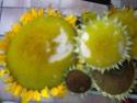 ma récolte de tournesol pour les graines Dscn1514