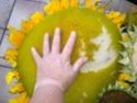 ma récolte de tournesol pour les graines Dscn1515