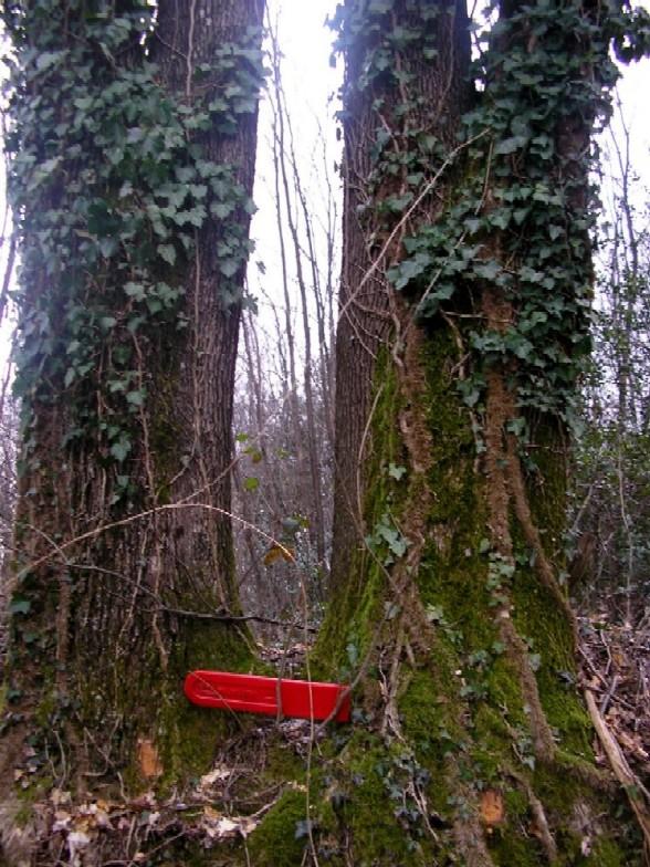 foto dal bosco, i nostri mezzi all'opera - Pagina 2 Foto_211
