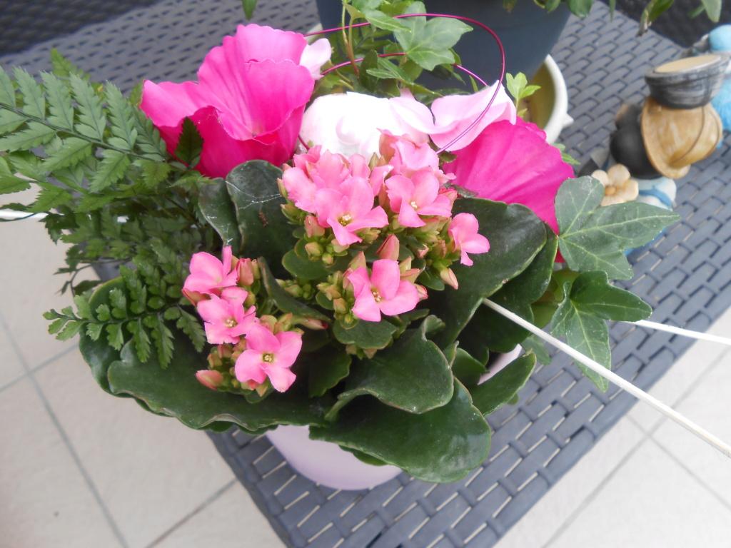 beau bouquet - Page 15 Dscn4917