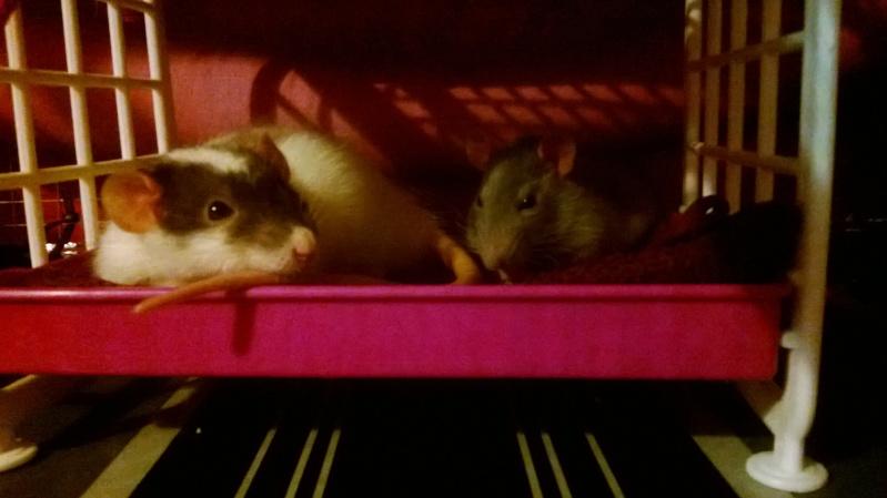 Mes Bébés D'amour !! Kanai & Razmo <3 Wp_20120