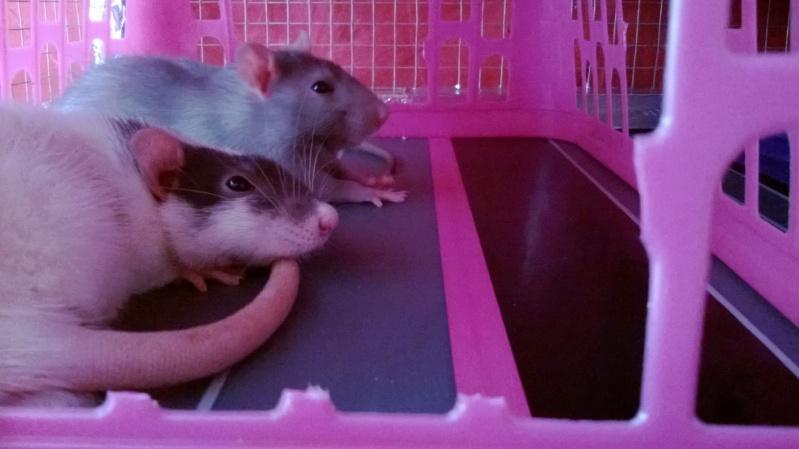 Mes Bébés D'amour !! Kanai & Razmo <3 Wp_20121