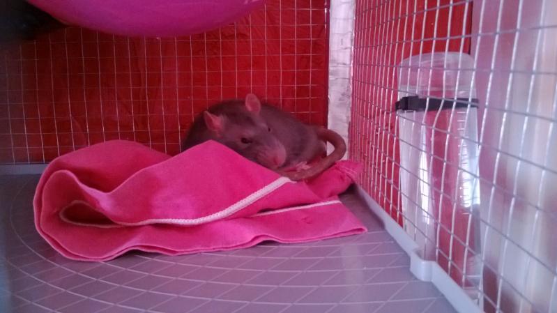 Mes Bébés D'amour !! Kanai & Razmo <3 Wp_20127