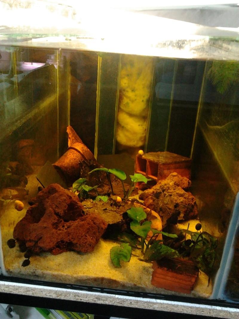Fish-dodo-room  Photo048