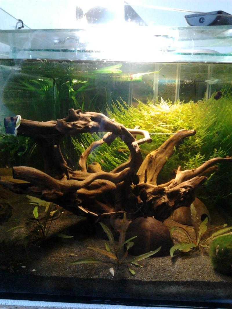 Fish-dodo-room  Photo049