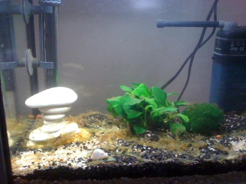 1er aquarium (20L) Img_0410