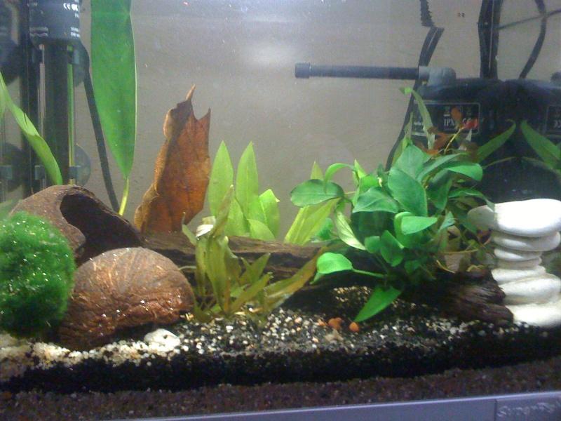 1er aquarium (20L) - Page 2 Img_0413