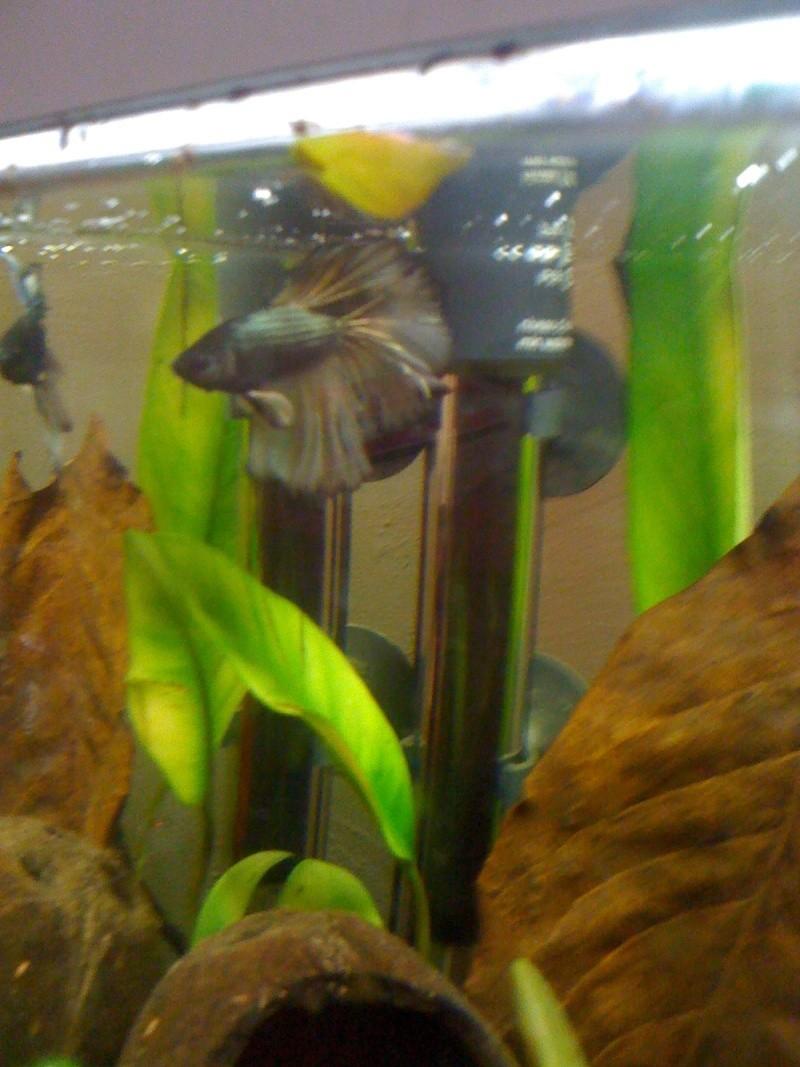 [ PHOTOS ] Les nids de bulles de nos poissons - Page 3 Img_0421