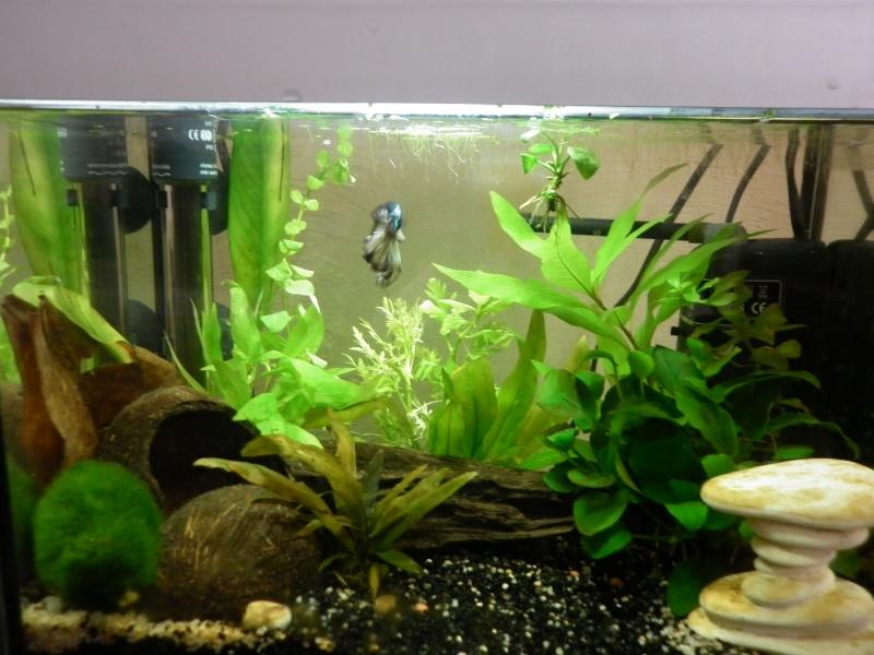 1er aquarium (20L) - Page 2 P1000513