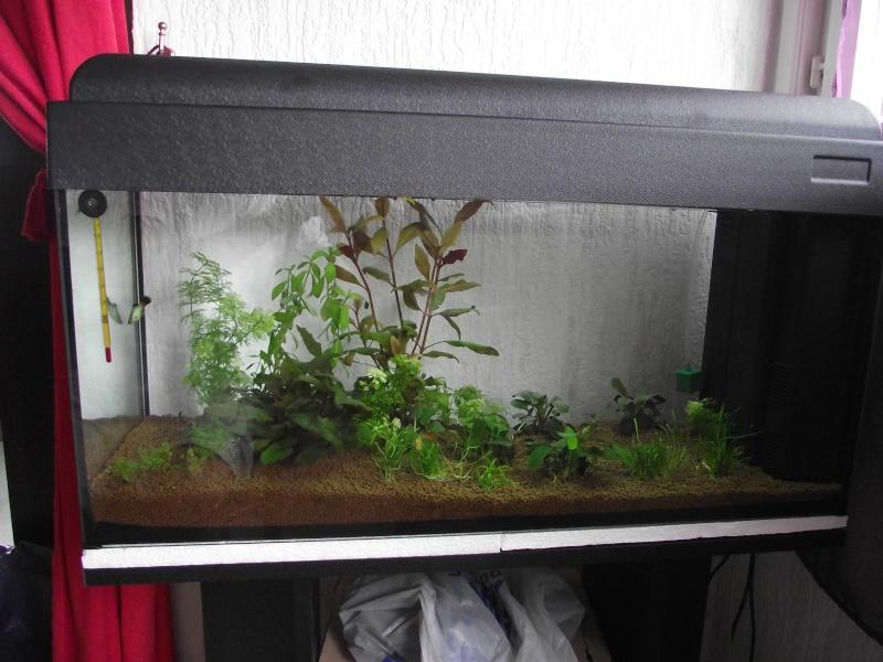 L'aquarium de 4417emmanuel Dscf2011