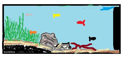 projet 120 L spécial platys  Aquari10