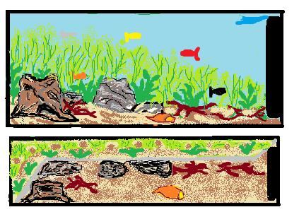 projet 120 L spécial platys  Aquari11