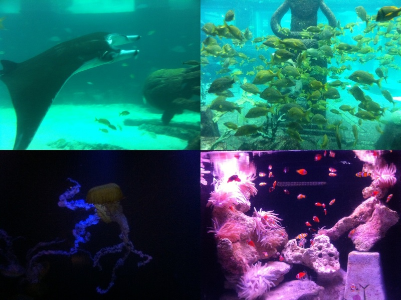 [TR] 3 semaines août 2013 en famille Universal-Disney cruise-WDW-Discovery Cove-Bush Garden-Seaworld - Page 4 The_di10