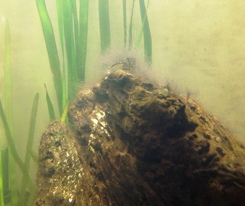 Help with Algae I.D. Image410