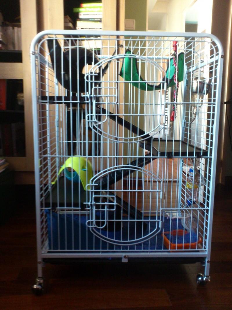 La cage de Kiwi, Lemon et peut être le fruit mystère Dsc_0111