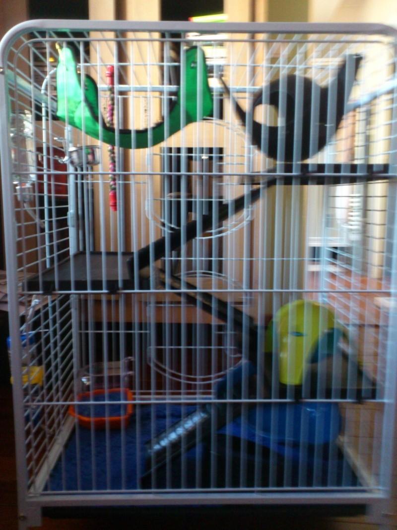 La cage de Kiwi, Lemon et peut être le fruit mystère Dsc_0113