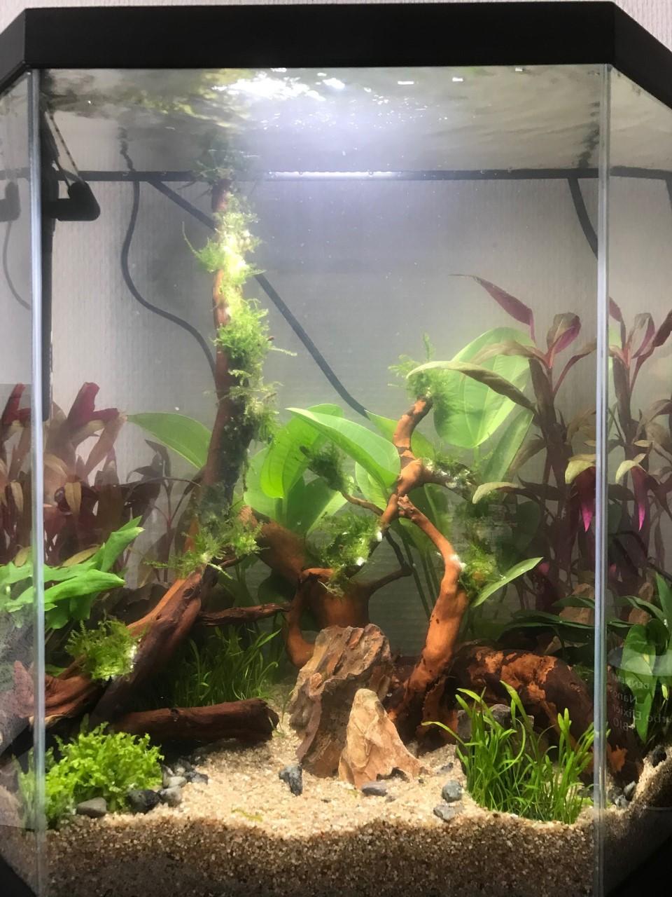 Aquarium 30L, premier essai Aquascaping pour crevettes Thumbn13