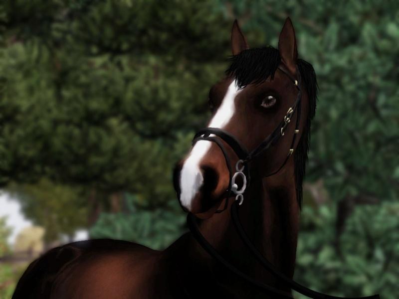 Galerie de valou   chevaux//sims  Screen20